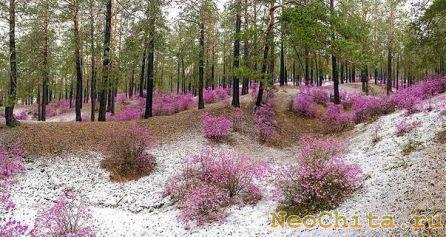 Картинки про природу забайкалья